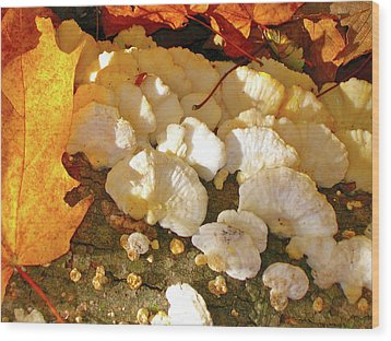 Wood Print featuring the photograph Schrooms And Shadows by Randy Rosenberger