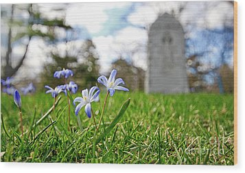 Wood Print featuring the photograph Scilla In Cemetery by Charline Xia