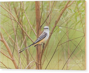 Wood Print featuring the photograph Scissortail In Scrub by Robert Frederick