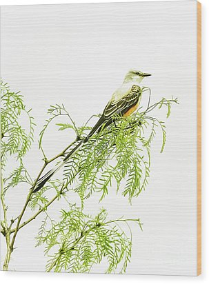 Wood Print featuring the photograph Scissortail On Mesquite by Robert Frederick
