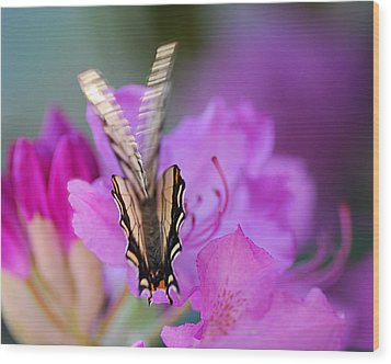 Wood Print featuring the photograph Scissorwings by Susan Capuano