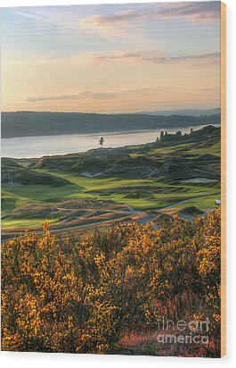 Scotch Broom -chambers Bay Golf Course Wood Print