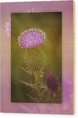 Scotch Thistle Wood Print by Holly Kempe