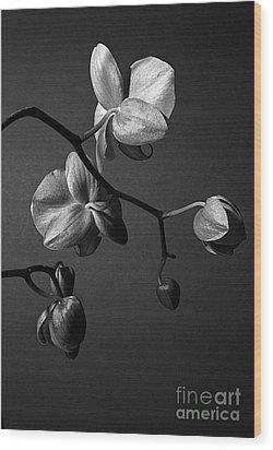 Scotopic Vision 3 - Orchid Wood Print by Pete Hellmann