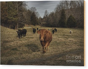 Scotopic Vision 9 - Cows Come Home Wood Print by Pete Hellmann