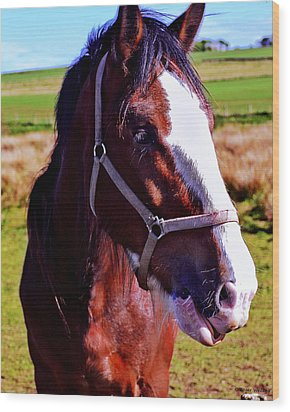 Scottish Clydesdale  Wood Print by Roger Wedegis
