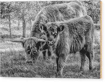 Scottish Highland Cattle Black And White Wood Print