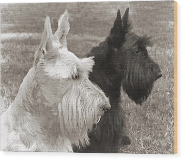 Scottish Terrier Dogs In Sepia Wood Print by Jennie Marie Schell