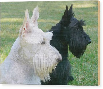Scottish Terrier Dogs Wood Print by Jennie Marie Schell