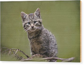 Scottish Wildcat Kitten Wood Print