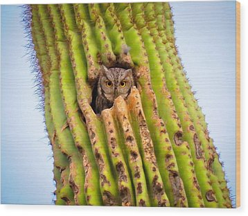 Screech Owl In Saguaro Wood Print