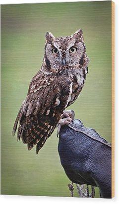 Screech Owl Perched Wood Print by Athena Mckinzie