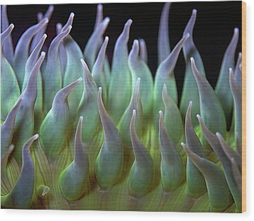 Sea Anemone Wood Print by by Frank Chen