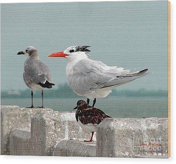 Wood Print featuring the photograph Sea Birds by Donna Brown