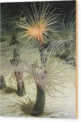 Sea Flower Wood Print by Daniel Hebard