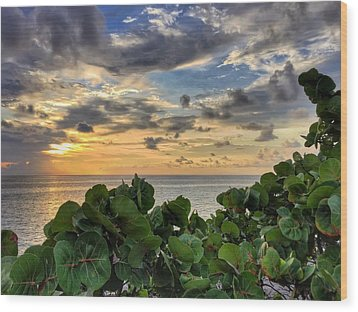 Sea Grape Sunrise Wood Print