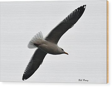 Sea Gull Hovering Wood Print by Bill Perry