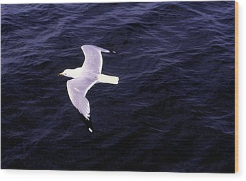 Wood Print featuring the photograph Sea Gull Over Water Dbwc by Lyle Crump