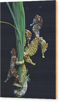 Wood Print featuring the photograph Sea Horse by Joan Reese