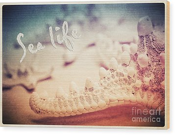 Sea Life Wood Print by Angela Doelling AD DESIGN Photo and PhotoArt