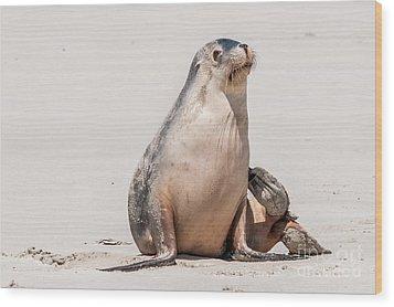 Sea Lion 1 Wood Print