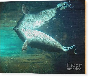 Sea Lion Reflection Wood Print by Emily Kelley