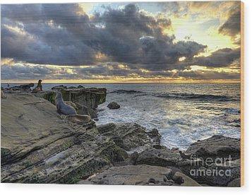Sea Lions At Sunset Wood Print by Eddie Yerkish