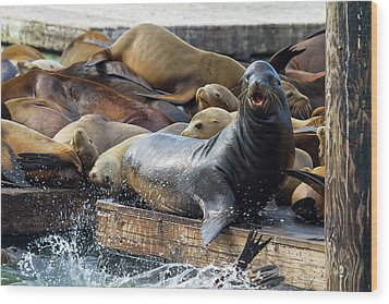 Sea Lions On The Floating Dock In San Francisco Wood Print