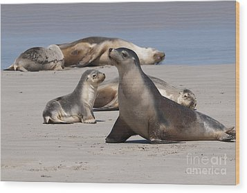 Wood Print featuring the photograph Sea Lions by Werner Padarin