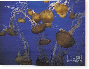 Sea Nettels Wood Print by Stan and Anne Foster
