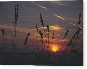 Sea Oats Blow In The Breeze As The Sun Wood Print by Stacy Gold