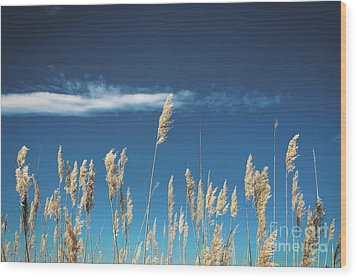 Wood Print featuring the photograph Sea Oats On A Blue Day by Colleen Kammerer
