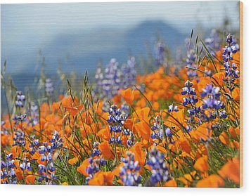 Sea Of California Wildflowers Wood Print by Kyle Hanson