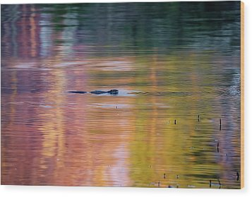 Wood Print featuring the photograph Sea Of Color by Bill Wakeley