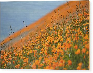Sea Of Poppies Wood Print by Kyle Hanson