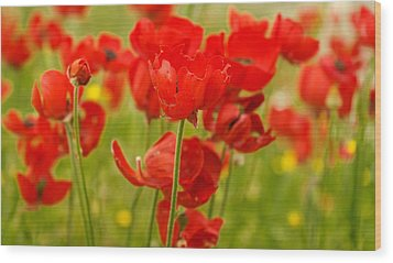 Sea Of Red Buttercups Wood Print