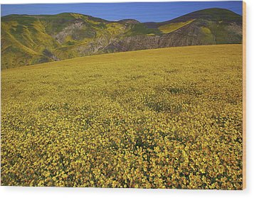 Wood Print featuring the photograph Sea Of Yellow Up In The Temblor Range At Carrizo Plain National Monument by Jetson Nguyen