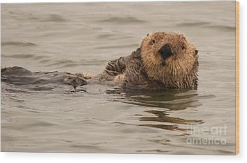 Sea Otter All Cuddled Up Wood Print by Max Allen
