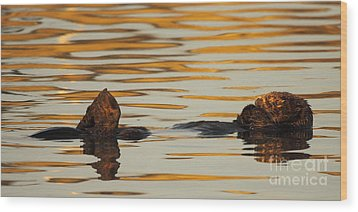 Wood Print featuring the photograph Sea Otter Laying Low In The Water by Max Allen