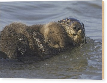 Sea Otter Mother With Pup Monterey Bay Wood Print by Suzi Eszterhas