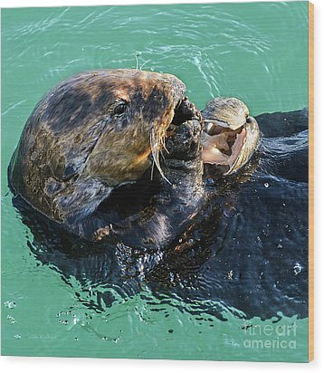 Sea Otter Munching On A Clam Wood Print