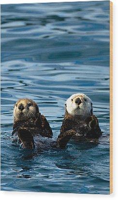 Sea Otter Pair Wood Print