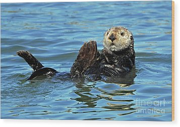 Sea Otter Primping Wood Print