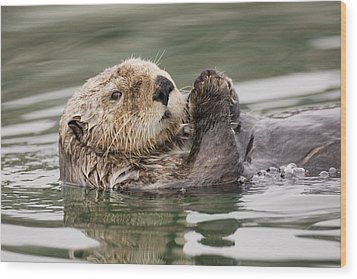 Sea Otter Profile Wood Print by Tim Grams