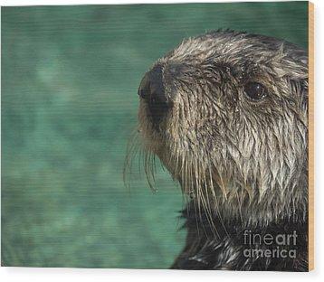 Sea Otter Stare Down Wood Print