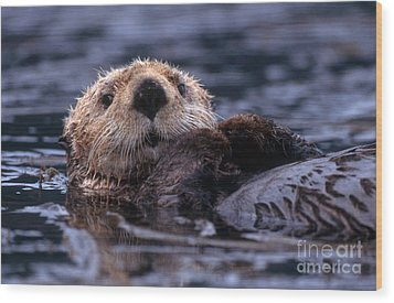 Sea Otter Wood Print by Yva Momatiuk and John Eastcott and Photo Researchers