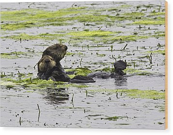 Sea Otters 1 Wood Print