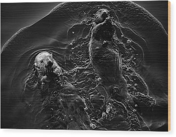 Sea Otters Iv Bw Wood Print by David Gordon