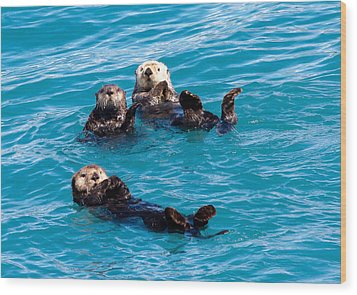 Sea Otters Wood Print by Phil Stone