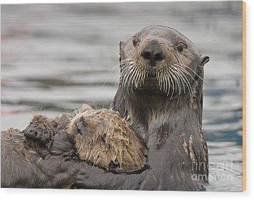Sea Otters Wood Print by Tim Grams